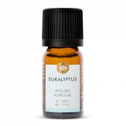 Huile essentielle d'eucalyptus bio, sauvage