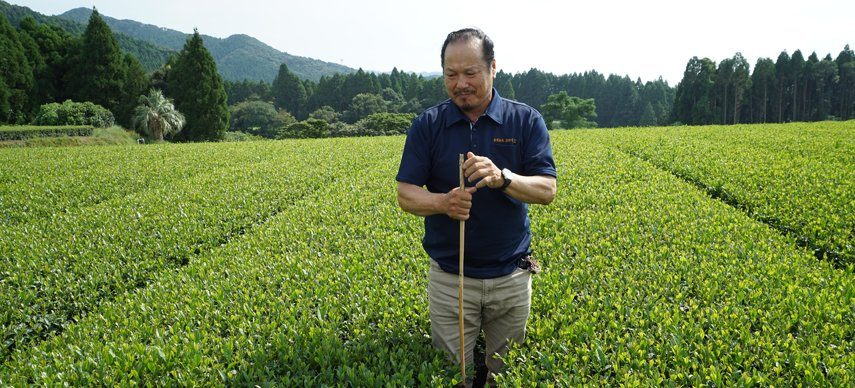 Ferme de thé Bio de Sakamoto